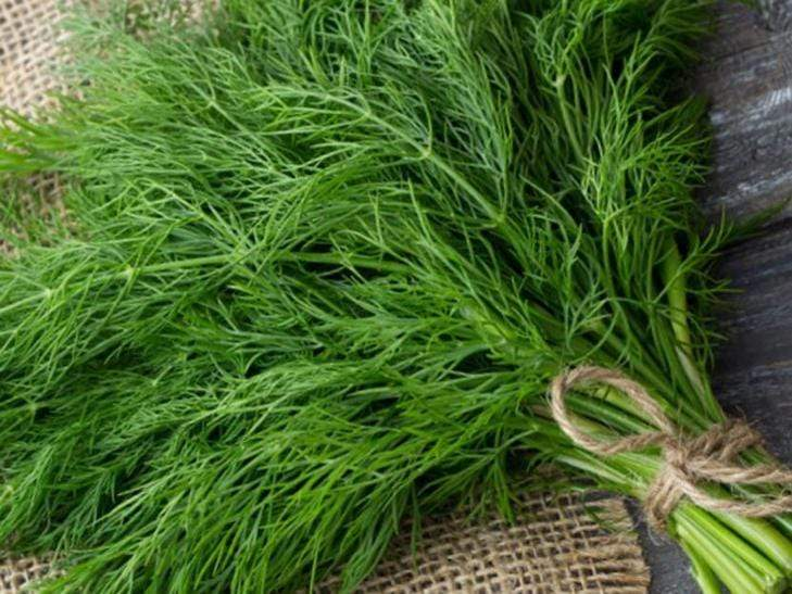 Dill, Superdukat -  Organic Heirloom vegetable seed Australia LifeForce Seeds