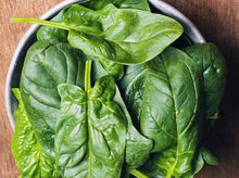 Load image into Gallery viewer, Spinach Giant Noble -  Organic Heirloom vegetable seed Australia LifeForce Seeds