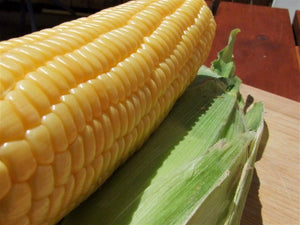 Sweet Corn Golden Bantam - LifeForce Seeds