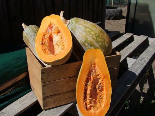 Pumpkin, Gramma -  Organic Heirloom vegetable seed Australia LifeForce Seeds