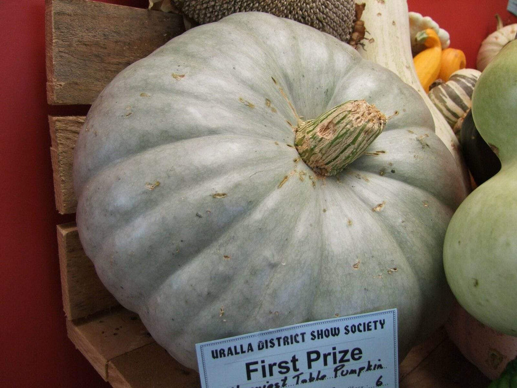 Pumpkin, Jarrahdale -  Organic Heirloom vegetable seed Australia LifeForce Seeds