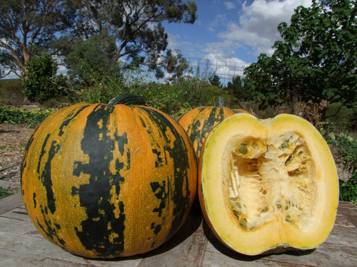 Pumpkin, Kakai Pepita -  Organic Heirloom vegetable seed Australia LifeForce Seeds