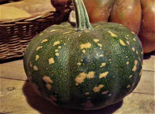Pumpkin, Kent/ Jap -  Organic Heirloom vegetable seed Australia LifeForce Seeds