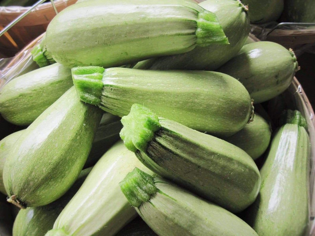 Zucchini, Lebanese -  Organic Heirloom vegetable seed Australia LifeForce Seeds