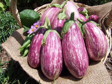 Load image into Gallery viewer, Eggplant, Listada de Gandia -  Organic Heirloom vegetable seed Australia LifeForce Seeds
