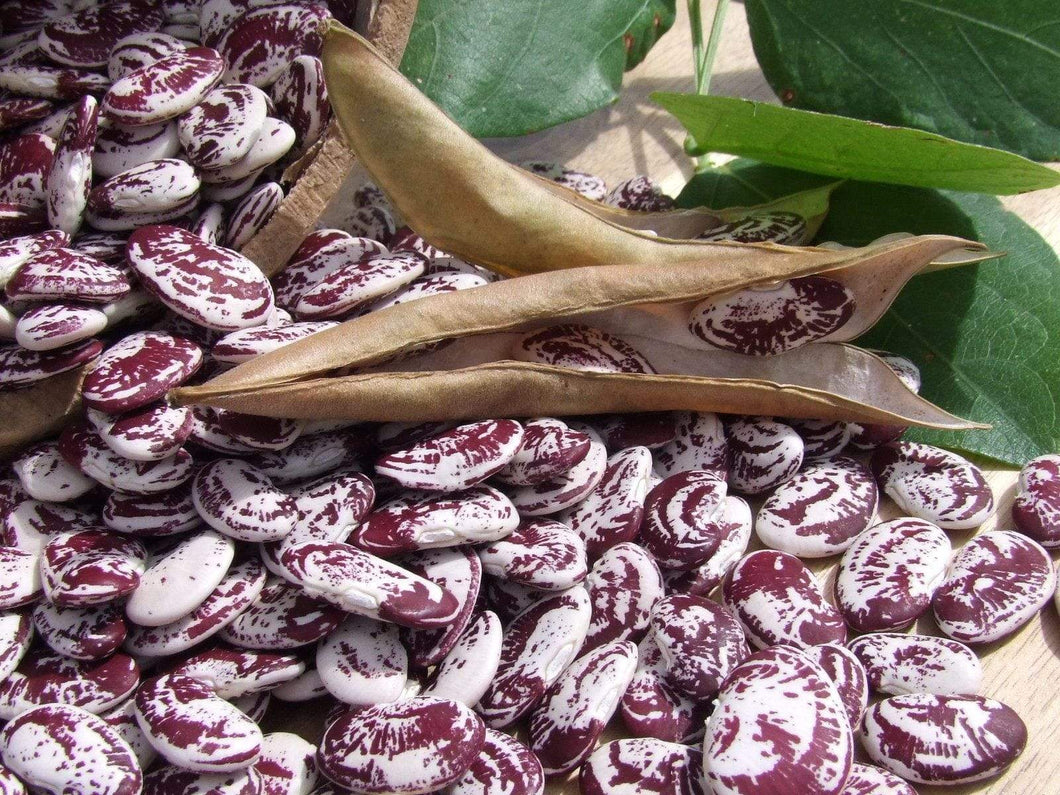 Bean Lima Madagascar -  Organic Heirloom vegetable seed Australia LifeForce Seeds