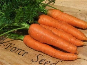 Carrot Nates -  Organic Heirloom vegetable seed Australia LifeForce Seeds