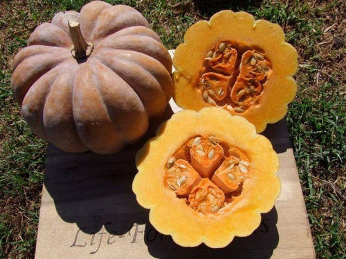 Pumpkin, Black Futsu -  Organic Heirloom vegetable seed Australia LifeForce Seeds