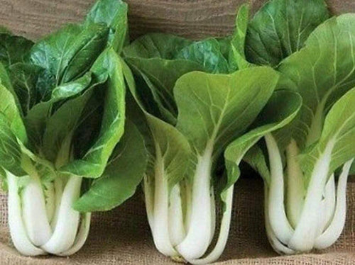 Pak Choi,  White Stem F1 -  Organic Heirloom vegetable seed Australia LifeForce Seeds