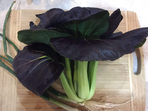 Pak Choi, Red Choi F1 -  Organic Heirloom vegetable seed Australia LifeForce Seeds