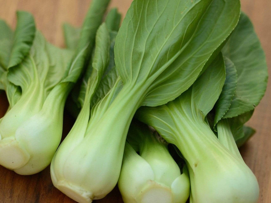 Pak Choi -  Organic Heirloom vegetable seed Australia LifeForce Seeds