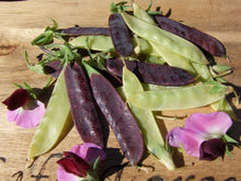 Load image into Gallery viewer, Pea Climbing, Golden & Purple Podded - LifeForce Seeds