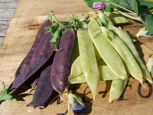 Load image into Gallery viewer, Pea Climbing, Golden & Purple Podded -  Organic Heirloom vegetable seed Australia LifeForce Seeds