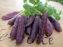 Load image into Gallery viewer, Pea Climbing, Purple podded -  Organic Heirloom vegetable seed Australia LifeForce Seeds