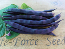 Load image into Gallery viewer, Bean Climbing Purple King -  Organic Heirloom vegetable seed Australia LifeForce Seeds