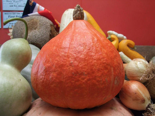 Pumpkin, Potimarron -  Organic Heirloom vegetable seed Australia LifeForce Seeds
