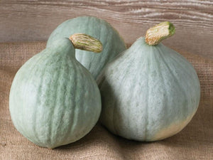 Pumpkin, Baby Blue -  Organic Heirloom vegetable seed Australia LifeForce Seeds