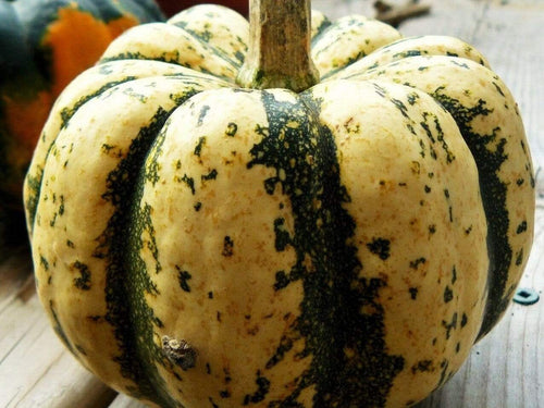Pumpkin, Sweet Dumpling -  Organic Heirloom vegetable seed Australia LifeForce Seeds