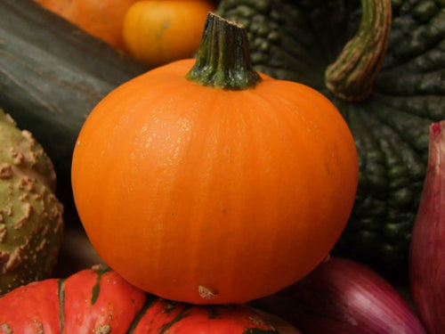 Pumpkin, Wee-Bee Little -  Organic Heirloom vegetable seed Australia LifeForce Seeds