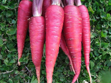 Load image into Gallery viewer, Carrot Purple Dragon -  Organic Heirloom vegetable seed Australia LifeForce Seeds
