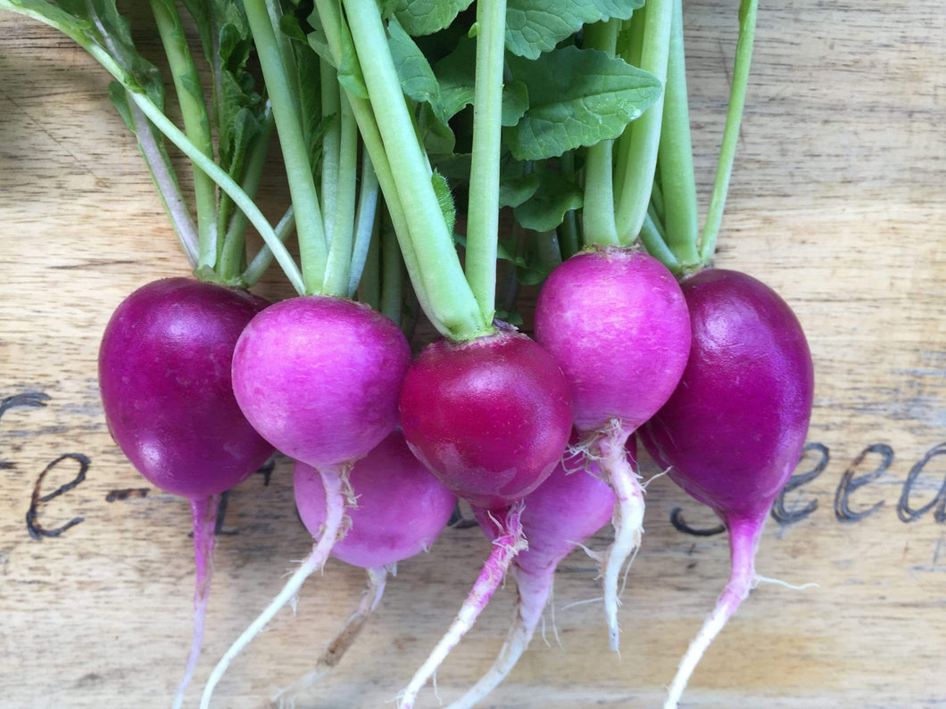 Radish, Purple Plum - LifeForce Seeds