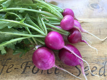 Load image into Gallery viewer, Radish, Purple Plum - LifeForce Seeds