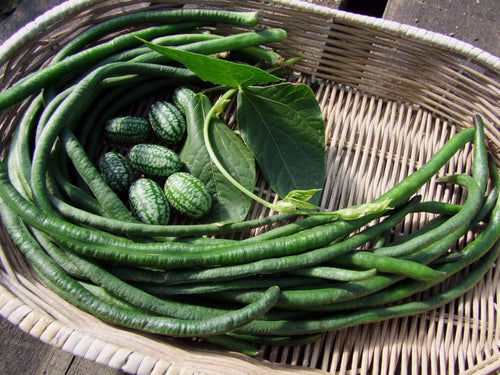 Bean Climbing Snake Red Dragon -  Organic Heirloom vegetable seed Australia LifeForce Seeds