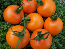Load image into Gallery viewer, Tomato, Orange Jaune Flamme -  Organic Heirloom vegetable seed Australia LifeForce Seeds
