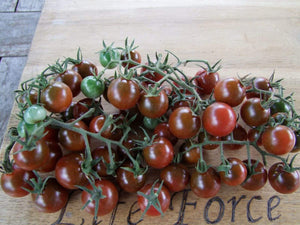 Tomato, Brown Berry -  Organic Heirloom vegetable seed Australia LifeForce Seeds