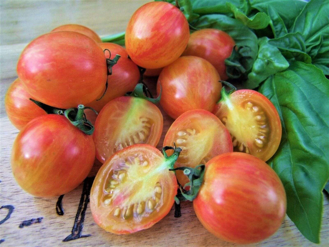 Tomato, Sunrise Bumble Bee -  Organic Heirloom vegetable seed Australia LifeForce Seeds