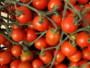 Tomato, Sweetie -  Organic Heirloom vegetable seed Australia LifeForce Seeds