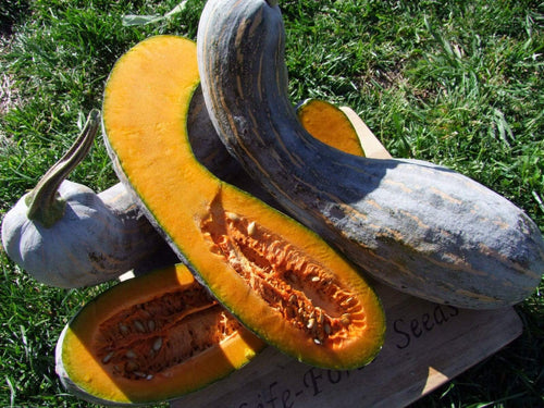 Pumpkin, Gramma Trombone -  Organic Heirloom vegetable seed Australia LifeForce Seeds