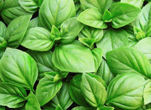 Load image into Gallery viewer, Basil Sweet Genovese - LifeForce Seeds