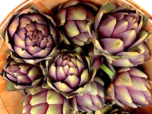 Artichoke, Violetto di Romagna - LifeForce Seeds