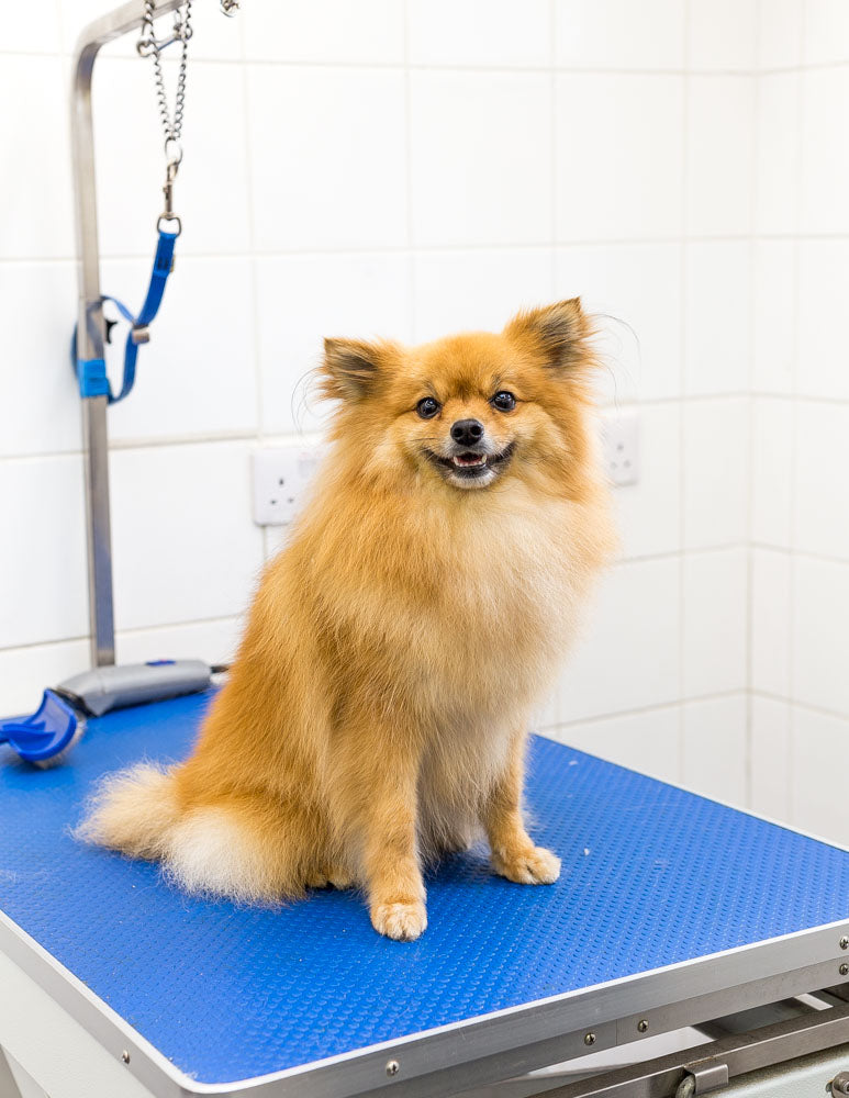 What is a Double Coat in Dogs? Double Coat Dog Grooming at Purplebone