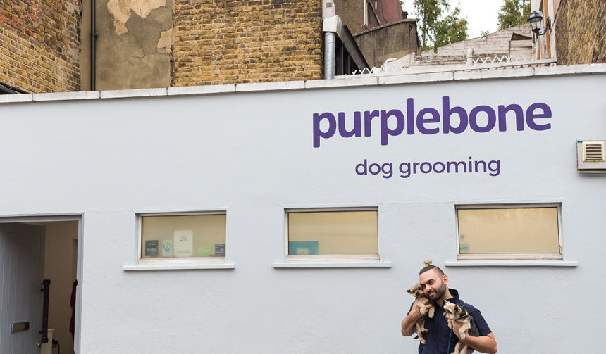 Opening Our Dog Grooming Parlour, Purplebone Hillgate