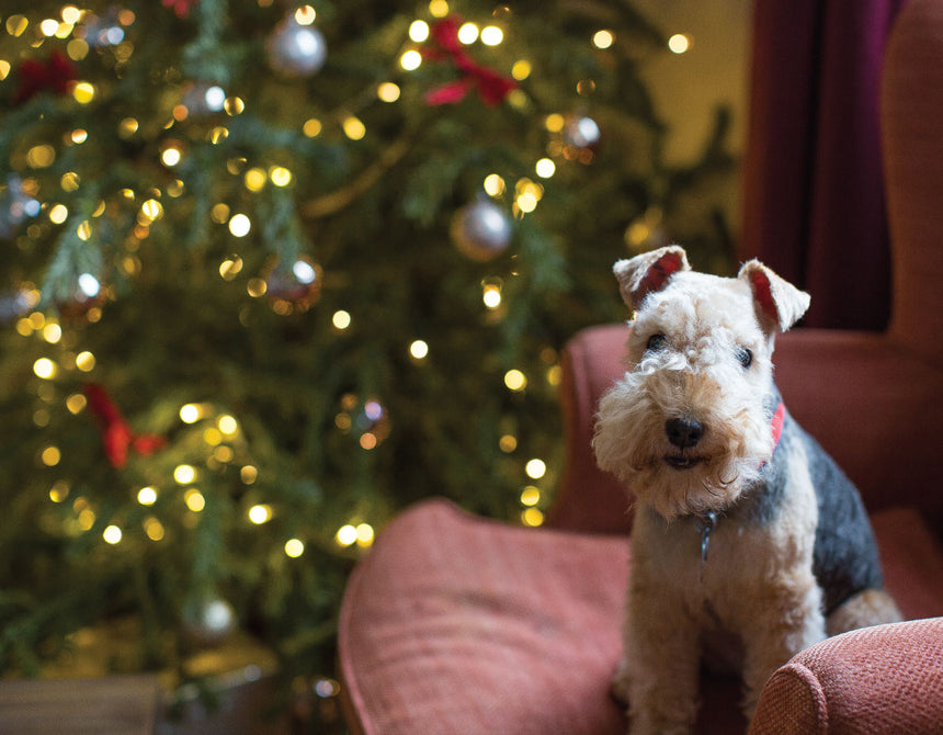 Dogs & Christmas, How to keep them safe during the festivities