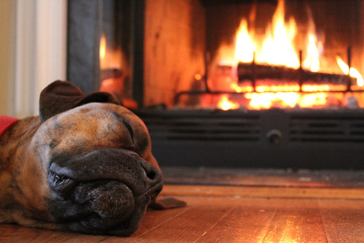 Dogs and Fireworks! How to keep your dog safe & happy throughout Firework season!