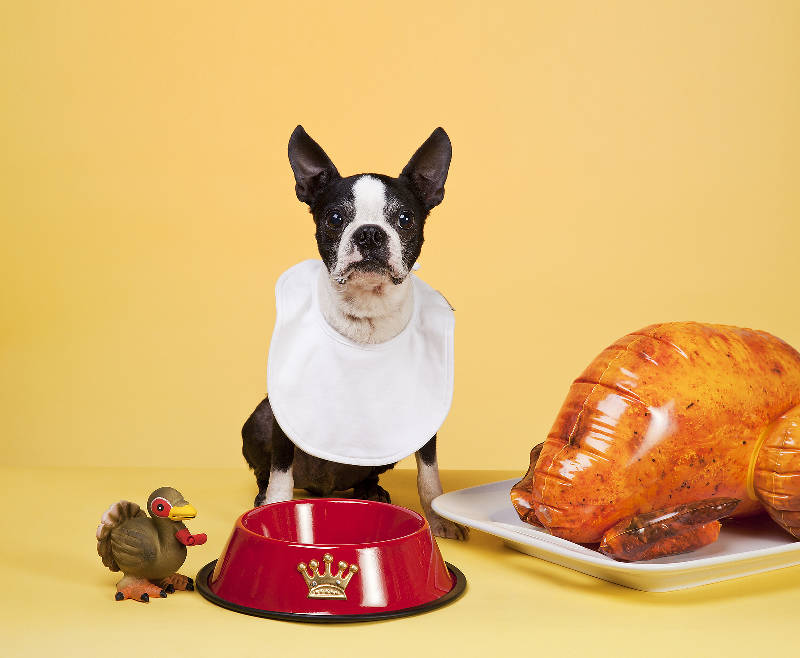 What's safe on your Christmas table, that your dog can and can't eat!
