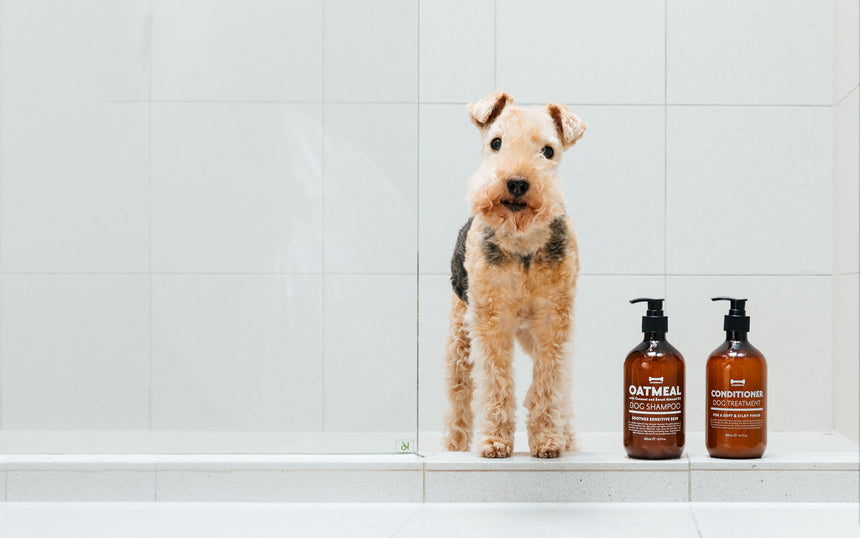 Expert Quality Hair Care for Dogs