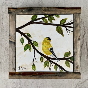 Little Golden Finch