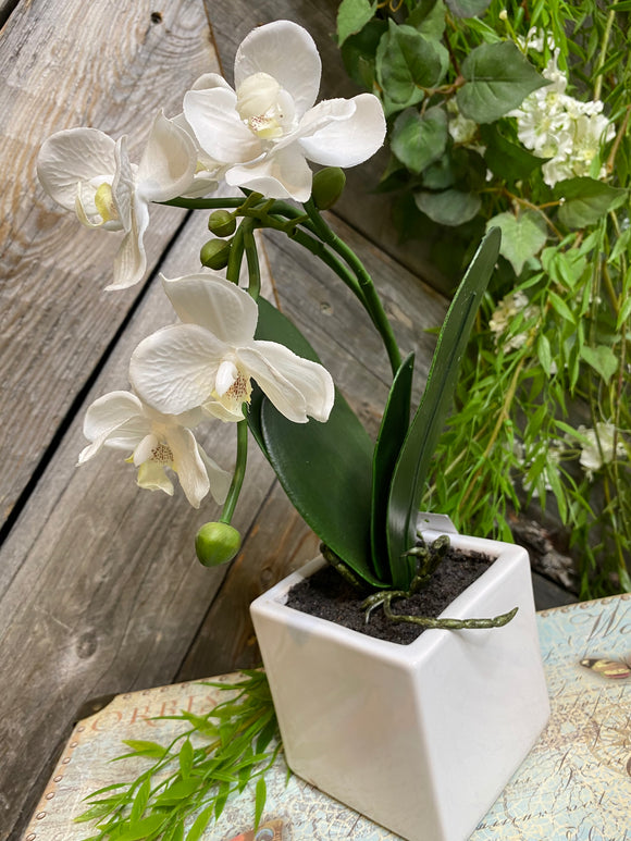 Giftware - Square Vase Orchids