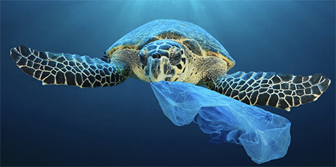 Turtle Plastic Free Products