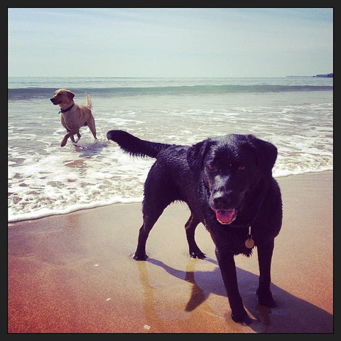 Marley and JD at Freshwater West Beach