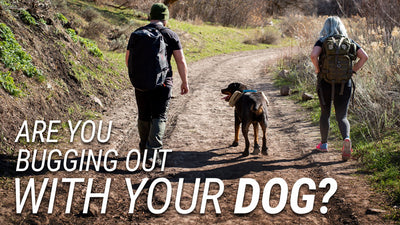 ARE YOU BUGGING OUT WITH YOUR DOG?