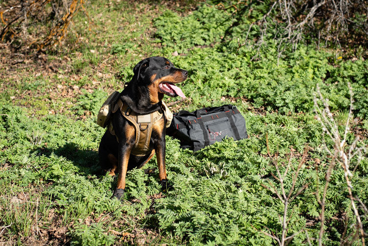 3v gear bug out bag for your dog