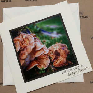 ''Local Photography'' Collection - Wild Mushrooms, Sidmouth