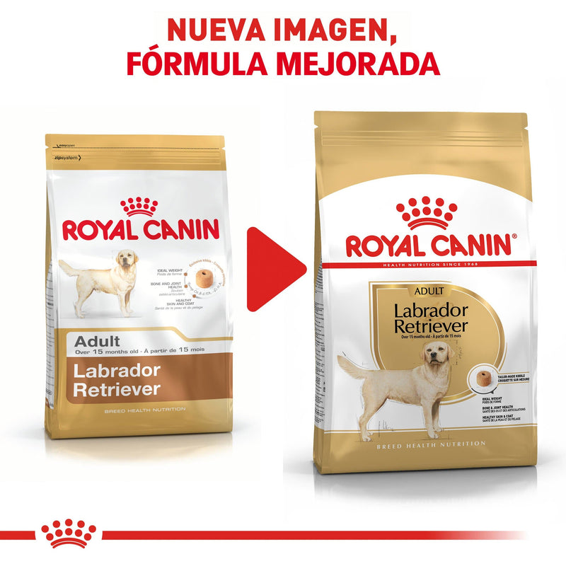 Royal Canin Labrador Retriever Adulto 13.6kg - Alimento Seco Labrador Adulto