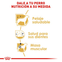 Alimento Royal Canin para Mini Poodles Adultos, Mini Poodle Adult de 4.54 kg