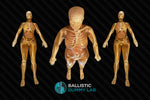 Ballistics Gel Female Body